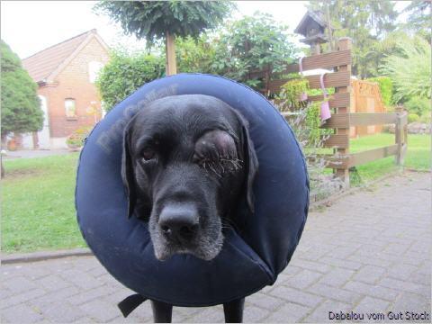 krebs symptome hund